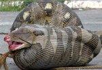 python_eats_sheep